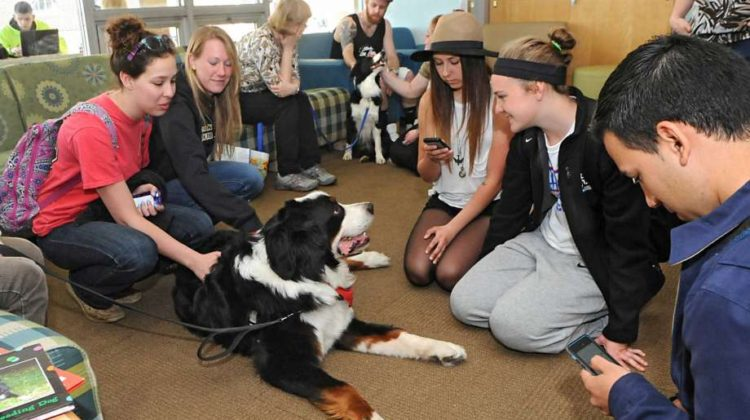 CANINE STRESS BUSTERS AT BUCKS COUNTY COMMUNITY COLLEGE